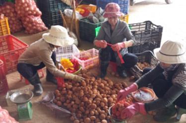 Eerste beoordeling Vietnamees aardappelproject