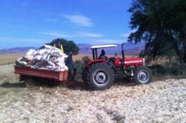 Meer duurzame biomassa in Zuid-Afrika