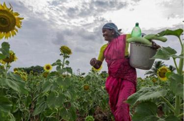 Kleine boeren dichterbij certificering