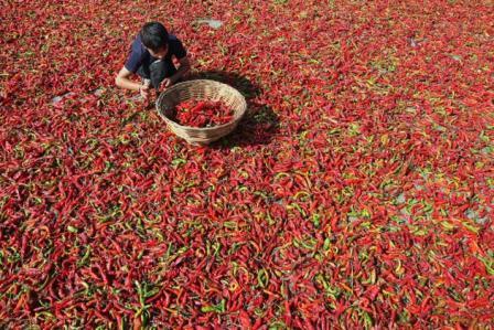 Kinderarbeid: specerijen en toerisme
